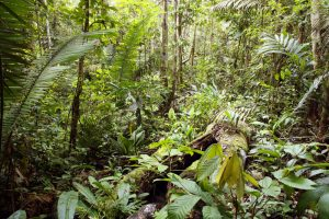 Houten brug over moerasgebied in de jungle Puerto Maldonado