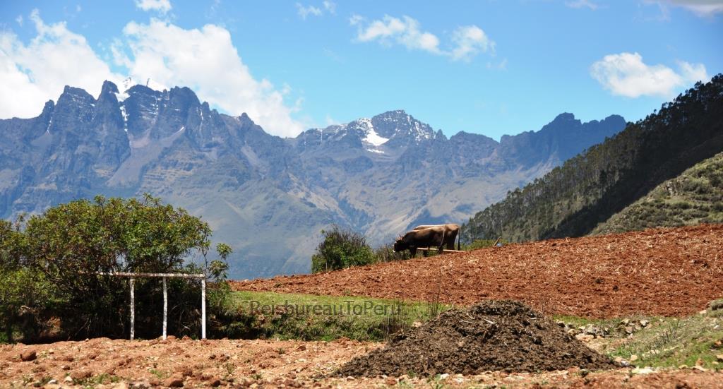 Valle Sagrado de los Inca's