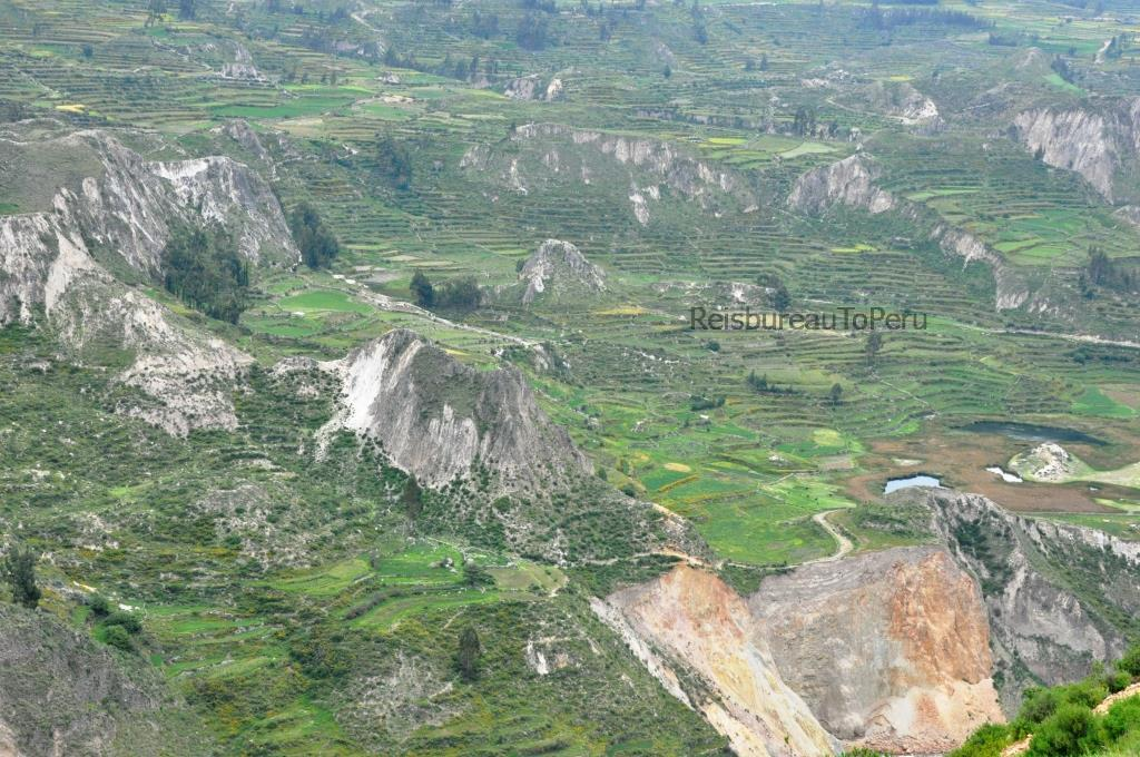De typische terrasbouw in de Colca Canyon